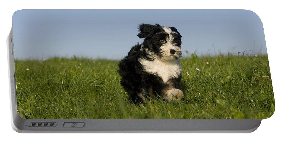 Tibetan Terrier Portable Battery Charger featuring the photograph Tibetan Terrier Puppy by Jean-Louis Klein & Marie-Luce Hubert
