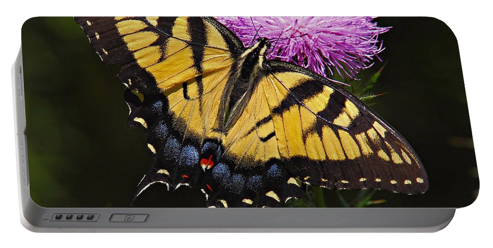 Butterfly Portable Battery Charger featuring the photograph Tiger Swallowtail by William Jobes