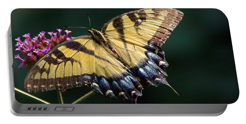 Tiger Swallowtail Portable Battery Charger featuring the photograph Tigress And Verbena by Byron Varvarigos