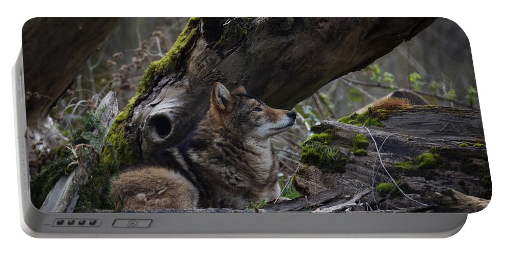 Timber Wolf Portable Battery Charger featuring the photograph Timber Wolf by Randy Hall