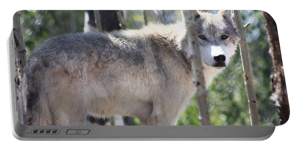 Timber Wolf Portable Battery Charger featuring the photograph Timber Wolf by Shane Bechler