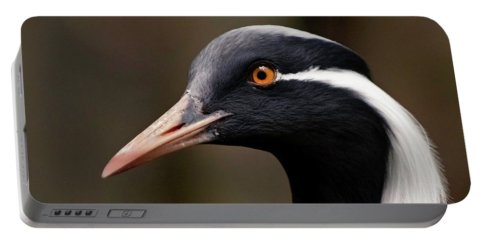 Demoiselle Crane Portable Battery Charger featuring the photograph Time For A Toupee by Melissa Sniderhan
