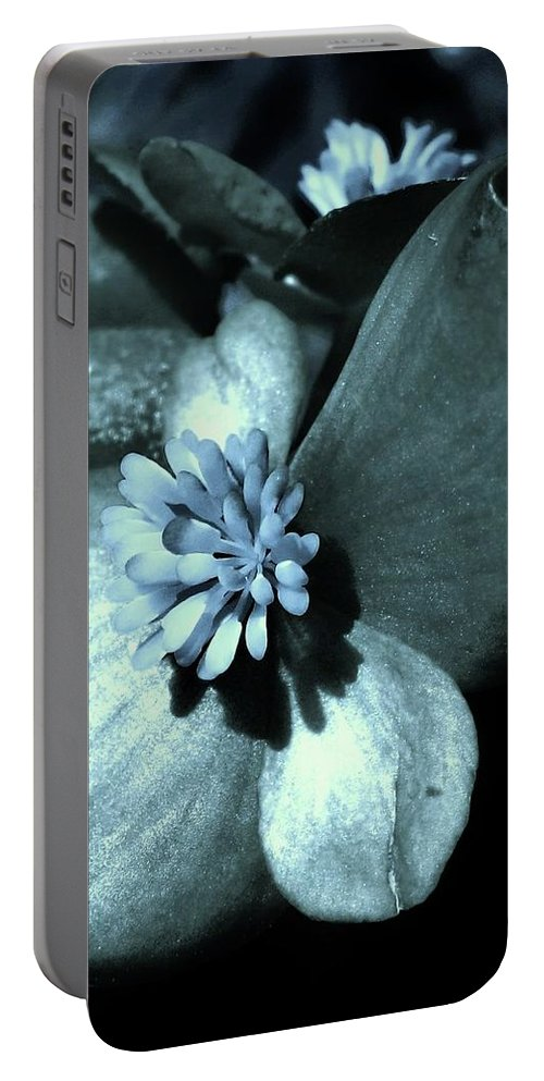 Teal Portable Battery Charger featuring the photograph Calm And Cool by Mary Ellen Frazee