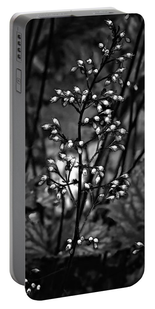 Flower Portable Battery Charger featuring the photograph Tiny Dancer Bw by Steve Harrington