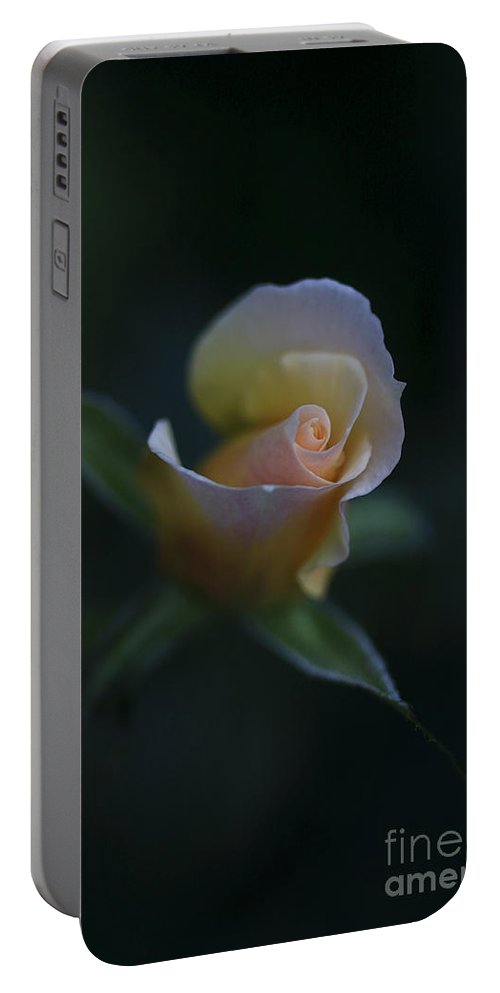 Flower Portable Battery Charger featuring the photograph Tiny Pink Rosebud by Deborah Benoit