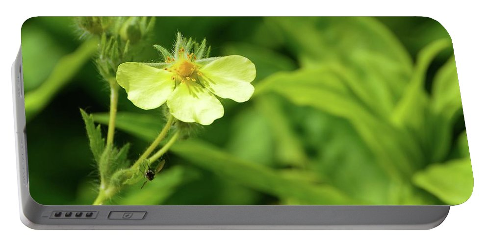 Nature Portable Battery Charger featuring the photograph Tiny Yellow by Lyle Crump