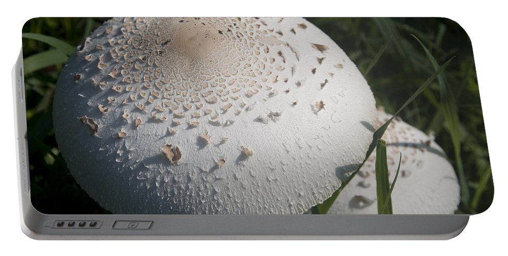 Nature Portable Battery Charger featuring the photograph Toad Stool by Steven Natanson