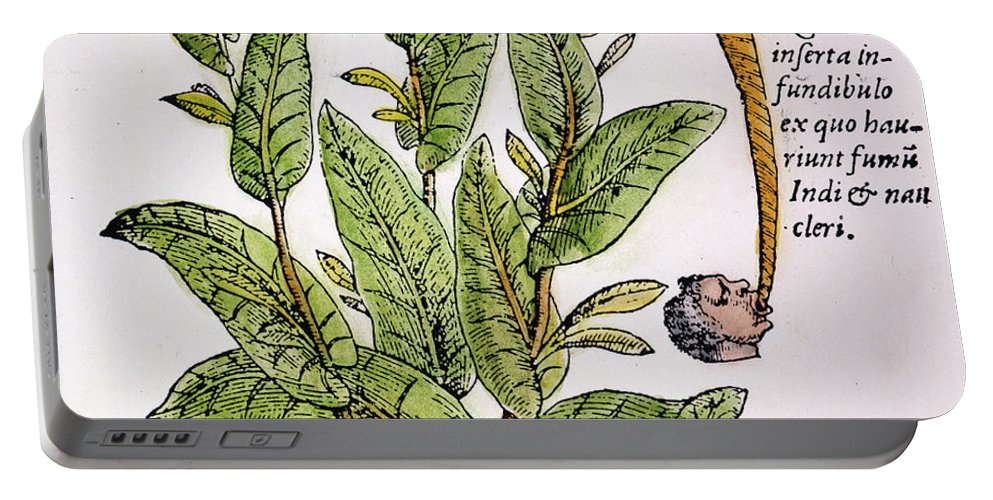 1576 Portable Battery Charger featuring the photograph Tobacco Plant by Granger