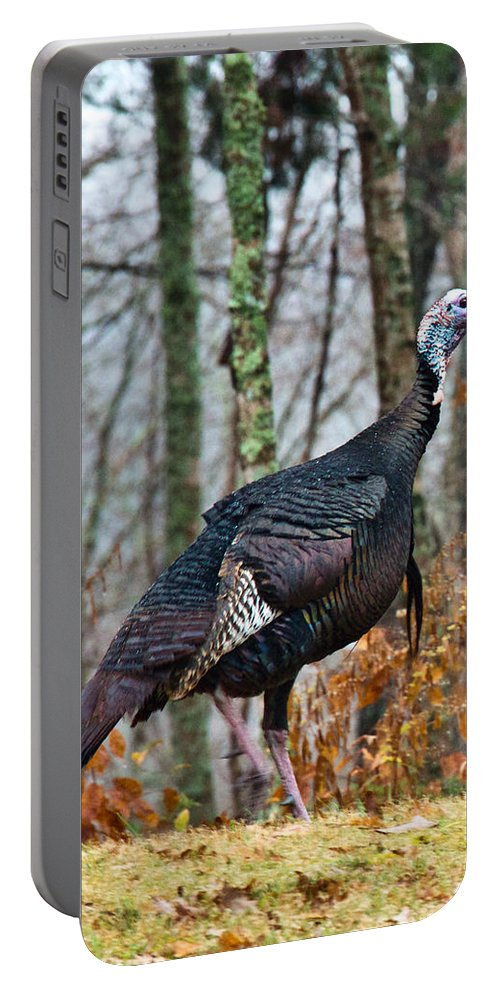 Tom Portable Battery Charger featuring the photograph Tom Turkey Early Moning 1 by Douglas Barnett