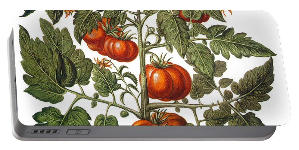 1613 Portable Battery Charger featuring the photograph Tomato & Watermelon 1613 by Granger