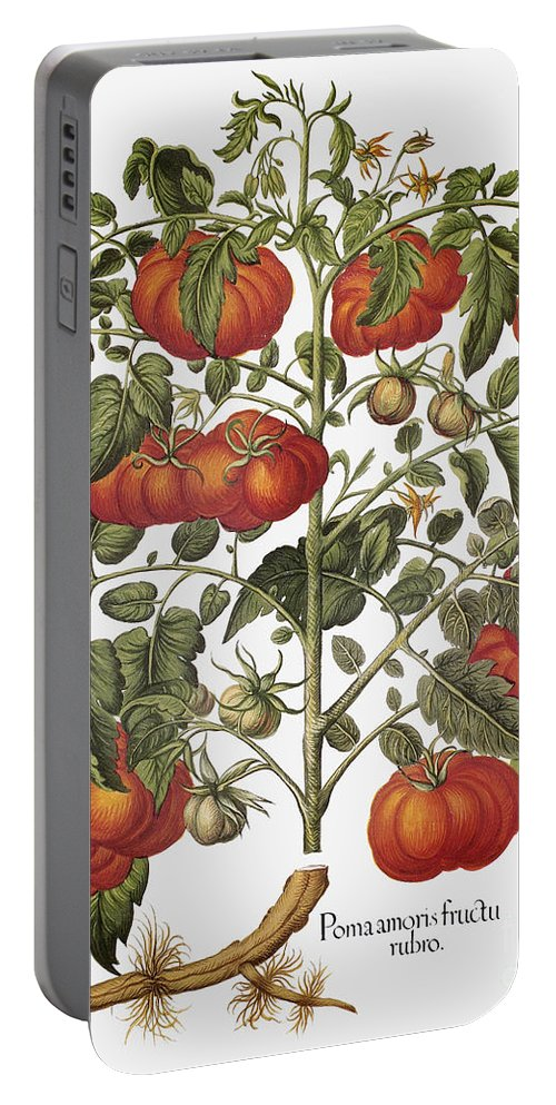 1613 Portable Battery Charger featuring the photograph Tomato, 1613 by Granger