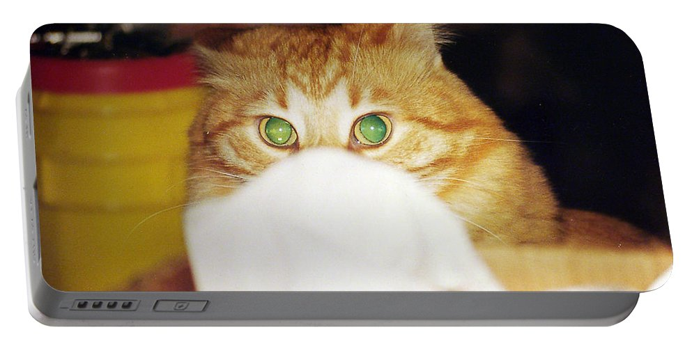 Cat Portable Battery Charger featuring the photograph Tommy by Kenneth Albin