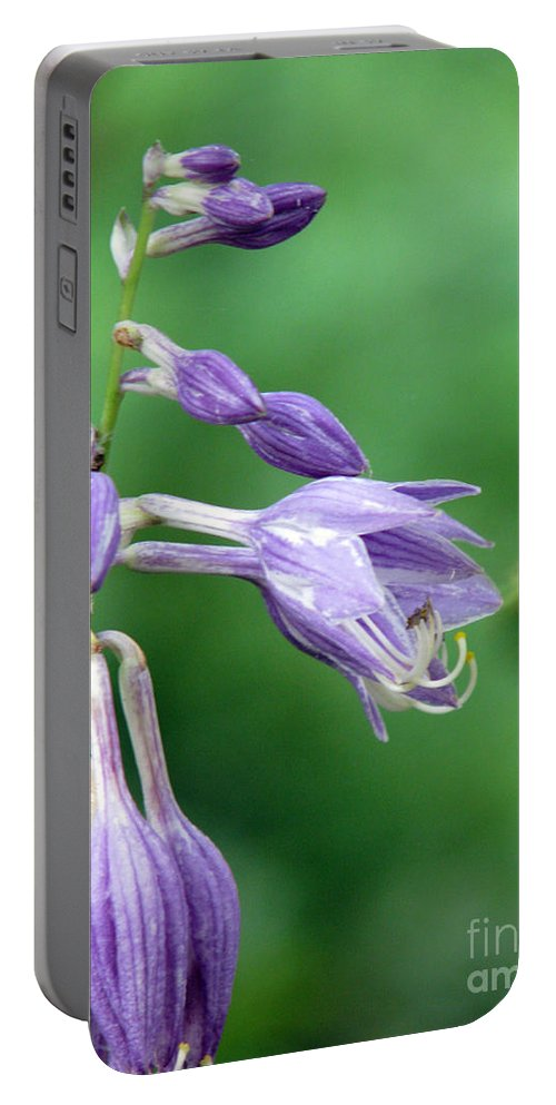 Bees Portable Battery Charger featuring the photograph Too Busy To Notice by Amanda Barcon