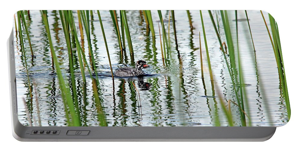 Pied Billed Grebe Portable Battery Charger featuring the photograph Too Cute by Debbie Oppermann