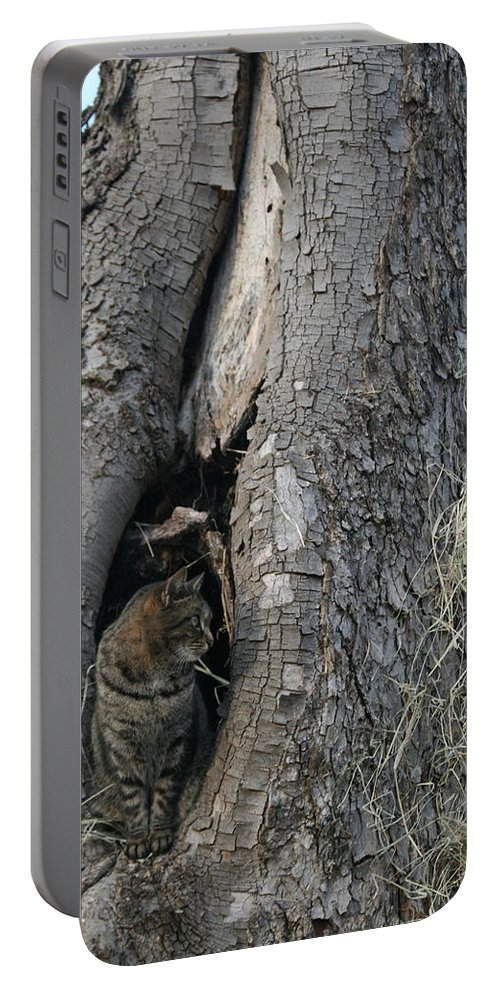 Cat Portable Battery Charger featuring the photograph Tornado by Shirley Sykes Bracken