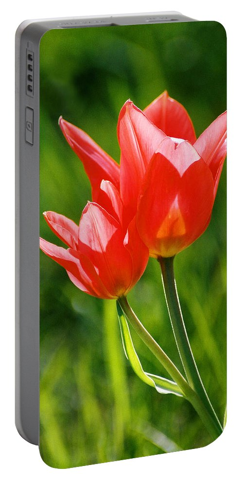 Flowers Portable Battery Charger featuring the photograph Toronto Tulip by Steve Karol