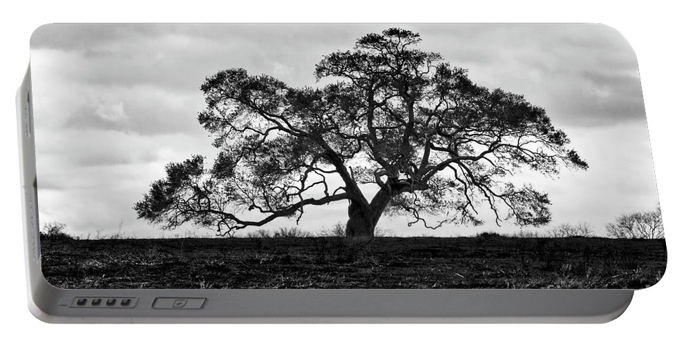 Oak Tree Portable Battery Charger featuring the photograph Tortue Oak by Scott Pellegrin