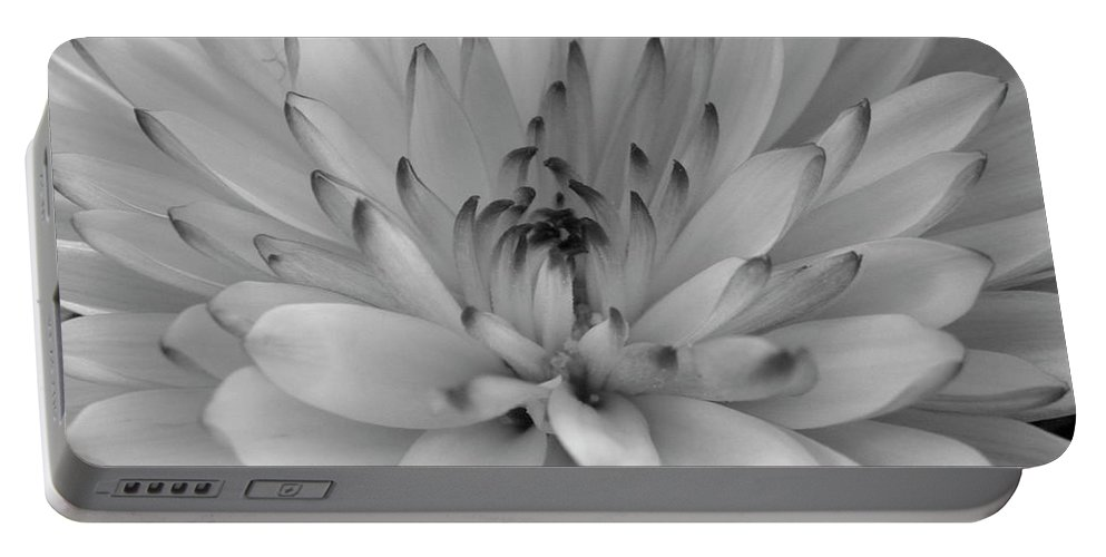 Nature Portable Battery Charger featuring the photograph Touch Of Black by Shannon Turek