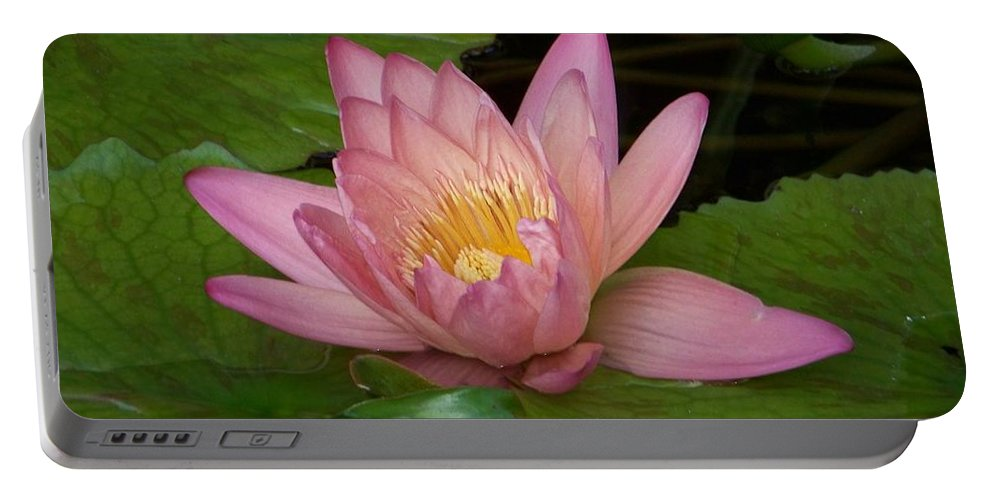 Water Lilly Portable Battery Charger featuring the photograph Touch Of Pink by Karen Wiles