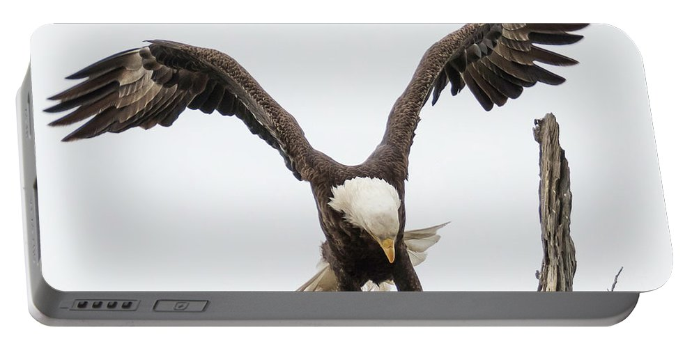 Birds Portable Battery Charger featuring the photograph Touching Down by Tony Fruciano