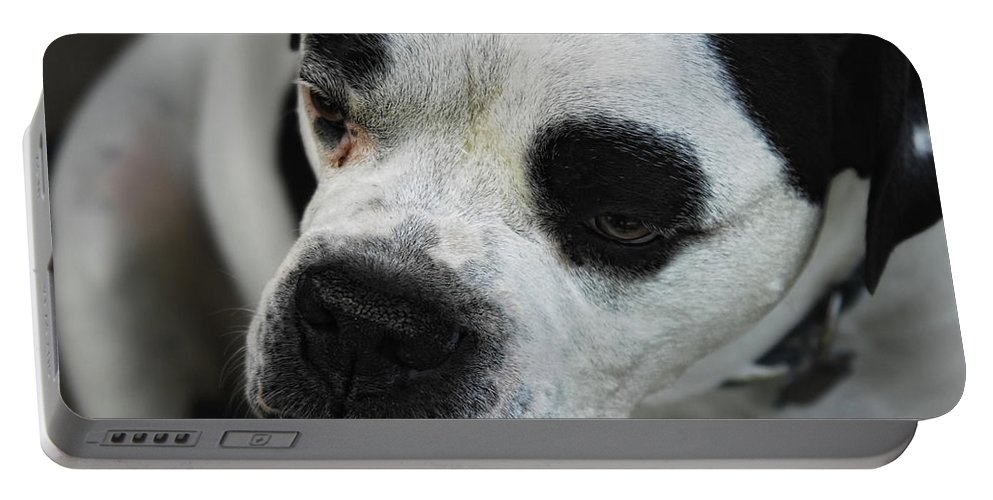Bull Dog Portable Battery Charger featuring the photograph Tough Guy by Donna Blackhall