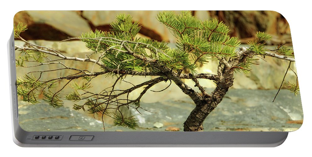 Tree Portable Battery Charger featuring the photograph Tough Upbringing by Donna Blackhall
