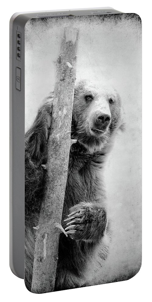 Grizzly Portable Battery Charger featuring the photograph Tree Bear by Athena Mckinzie
