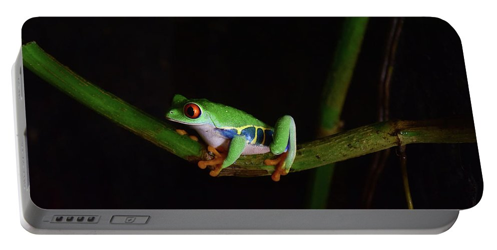 Frog Portable Battery Charger featuring the photograph Tree Frog by Sydney Thompson