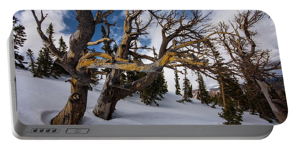 Landscape Portable Battery Charger featuring the photograph Tree Life In Winter by Rob Lantz