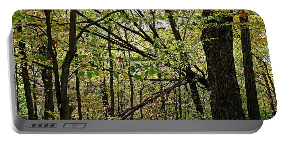 Tree Limbs Portable Battery Charger featuring the photograph Tree Limbs by Sherry Smith