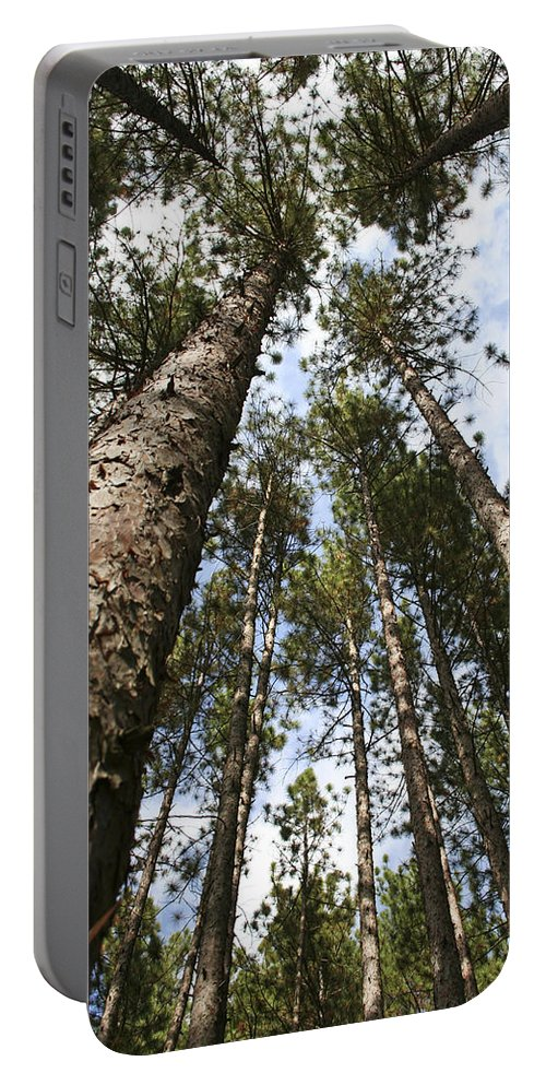 Autumn Portable Battery Charger featuring the photograph Tree Stand by Margie Wildblood