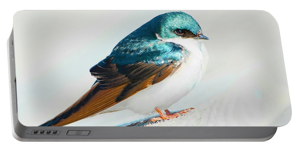 Tree Swallow Portable Battery Charger featuring the photograph Tree Swallow by Regina Geoghan