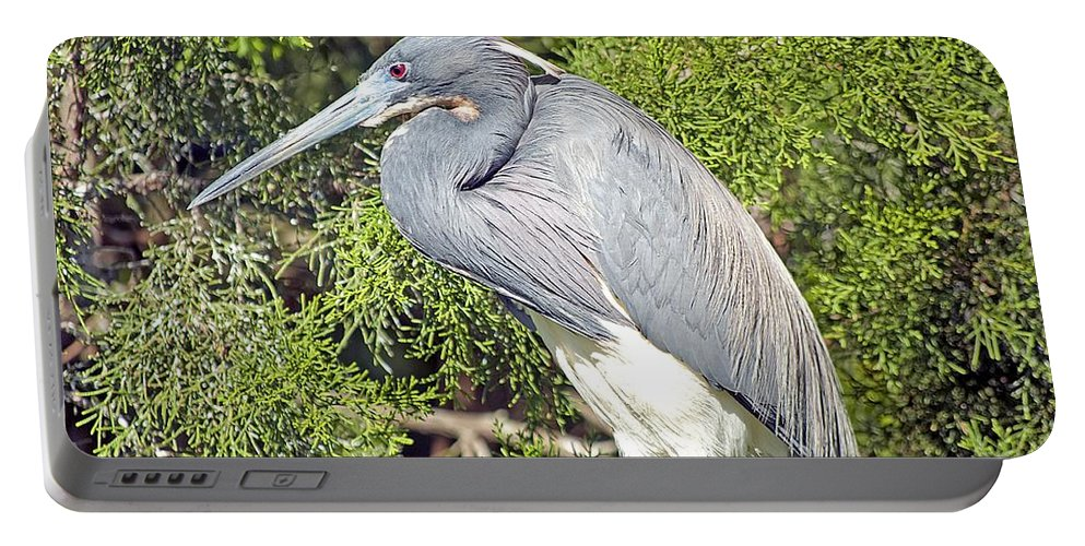 Animal Portable Battery Charger featuring the photograph Tricolor Heron Profile by Kenneth Albin