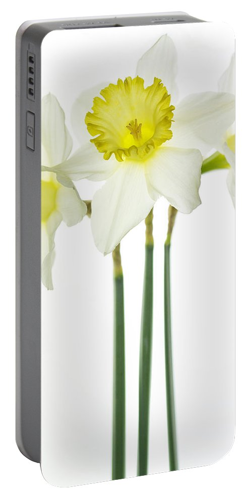 Daffodils Portable Battery Charger featuring the photograph Trio by Rebecca Cozart