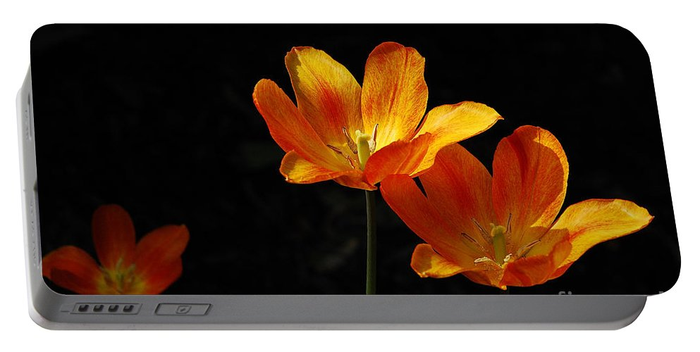 Tulips Portable Battery Charger featuring the photograph Triples by Lois Bryan