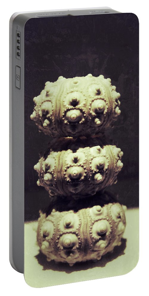 Sea Urchin Portable Battery Charger featuring the photograph Triplets by Brandon Addis