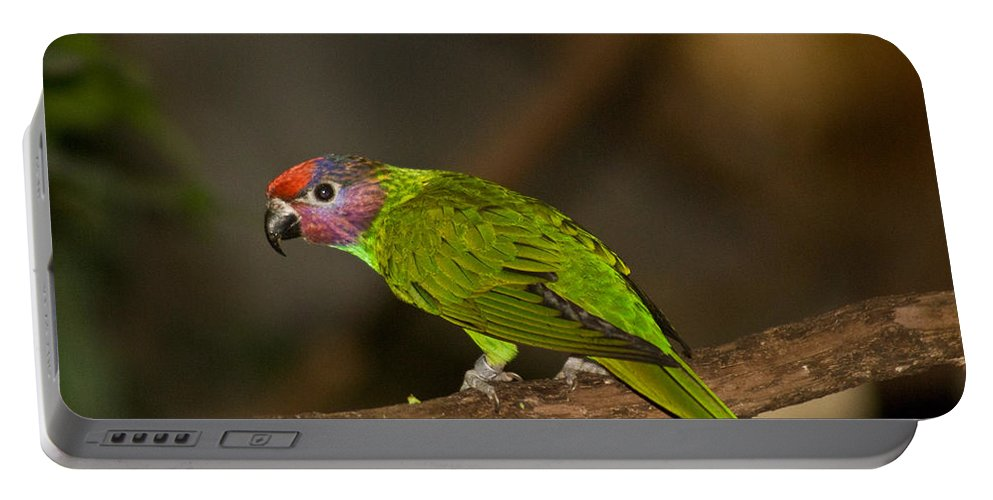 Tropical Portable Battery Charger featuring the photograph Tropical Bird by Douglas Barnett