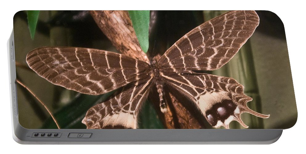 Butterfly Portable Battery Charger featuring the photograph Tropical Butterfly by Douglas Barnett