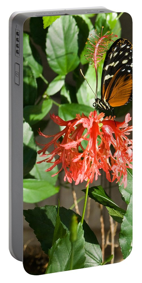 Tropical Portable Battery Charger featuring the photograph Tropical Butterfly On Flower by Douglas Barnett