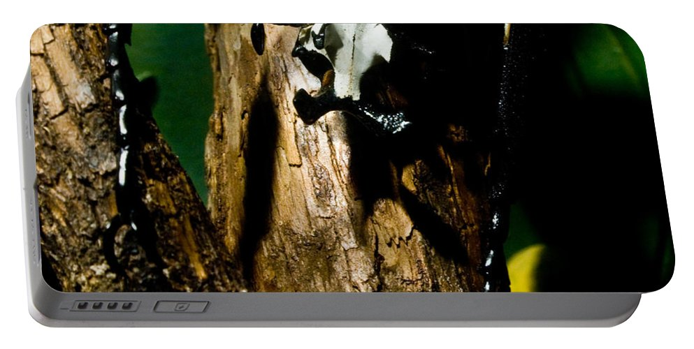 Scarab Portable Battery Charger featuring the photograph Tropical Scarab by Douglas Barnett