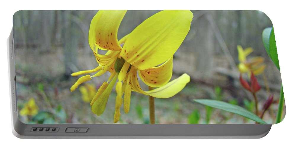 Lily Portable Battery Charger featuring the photograph Trout Lily - Erythronium Americanum by Mother Nature