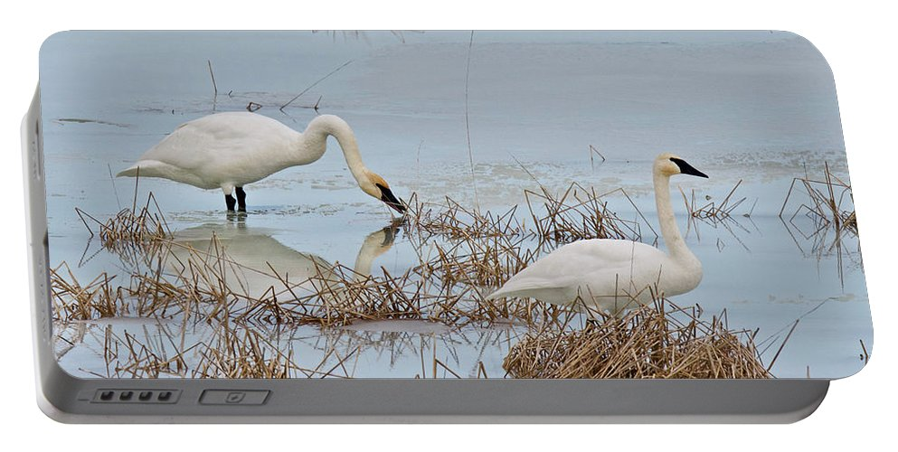Winter Portable Battery Charger featuring the photograph Trumpter Swans 8182 by Michael Peychich