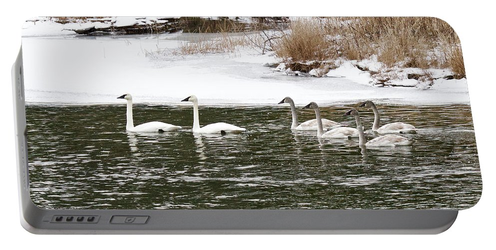 Wildlife Portable Battery Charger featuring the photograph Trumpter Swans Panorama by Michael Peychich