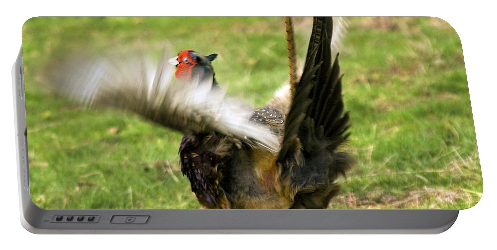 Pheasant Portable Battery Charger featuring the photograph Trying To Fly by Angel Ciesniarska