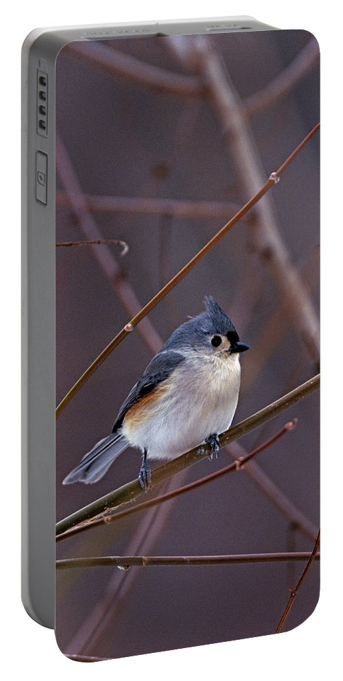 Tufted Titmouse Portable Battery Charger featuring the photograph Tufted Titmouse In Winter by John Harmon