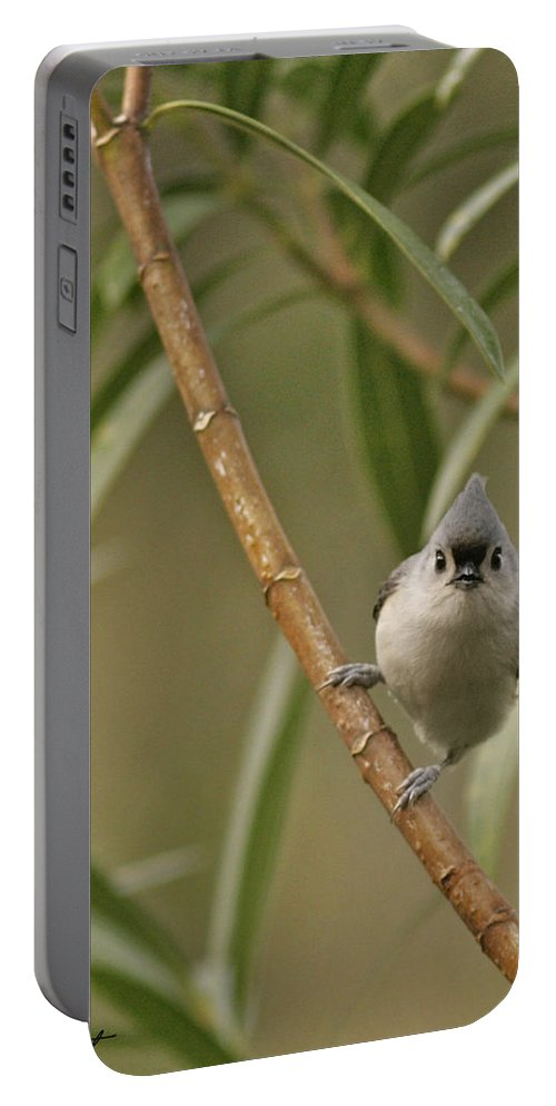 Birds Portable Battery Charger featuring the photograph Tufted Titmouse by Phill Doherty