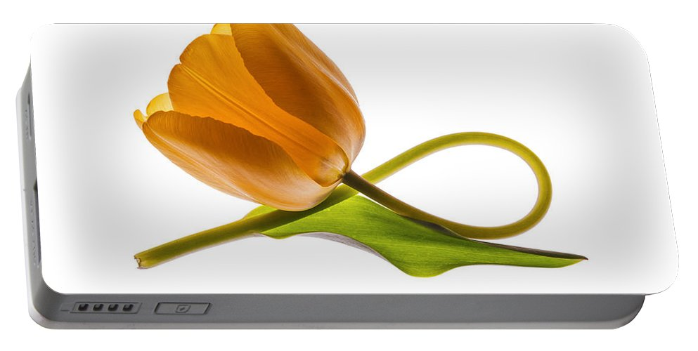Tulip Portable Battery Charger featuring the photograph Tulip Art On White Background by Vishwanath Bhat