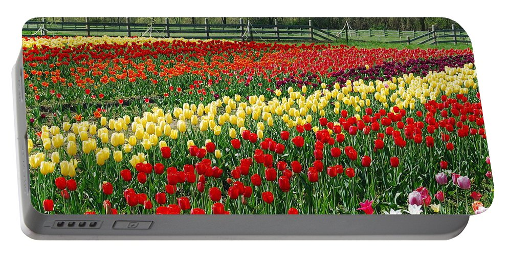The Yellow And Red Rows Of Tulips On The Farm Bring The Feeling Of Spring Into The Home. Portable Battery Charger featuring the photograph Tulip Fields by Michael Peychich