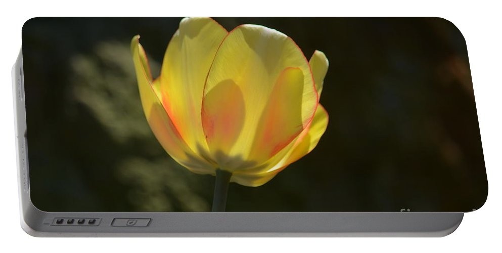 Tulip Glow Portable Battery Charger featuring the photograph Tulip Glow by Maria Urso