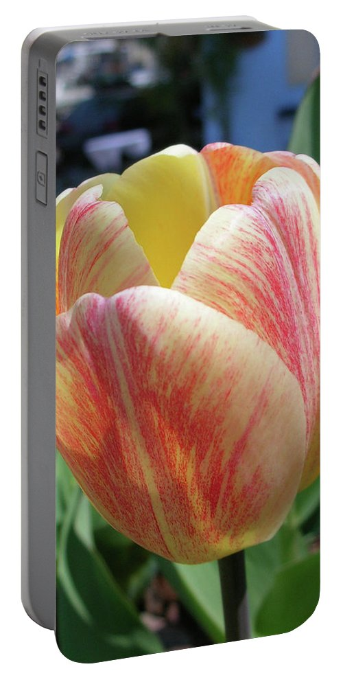 Flowers Portable Battery Charger featuring the photograph Tulip by Guy Whiteley